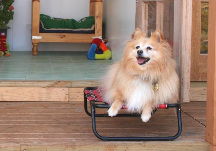 menu-executive-dog